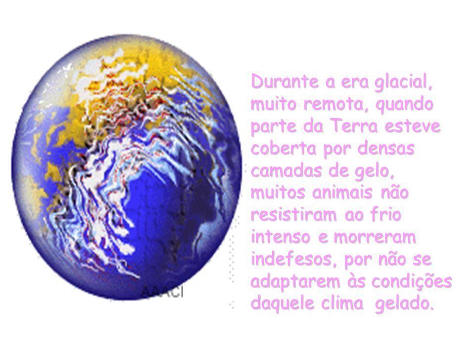 Durante a era glacial, muito remota, quando parte da Terra esteve coberta por densas camadas de gelo, muitos animais não resistiram ao frio intenso e