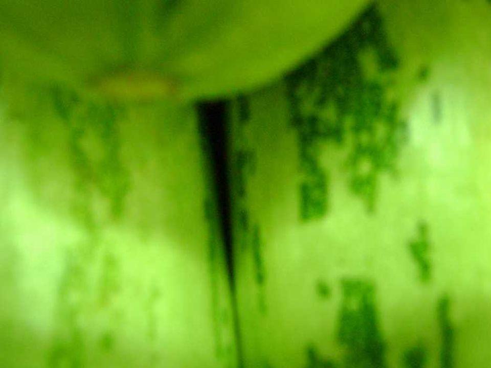 ABOBRINHAS III abobrinhas fazem à perfeição a contramão da fala abobrinhas cheias ou vazias redondas ou cúbicas nos trazem a saudável sensação de que o corpo aplaude no inverno, quente no verão, fria mas sempre abobrinha, calmamente abobrinha silenciosamente abobrinha deliciosamente abobrinha