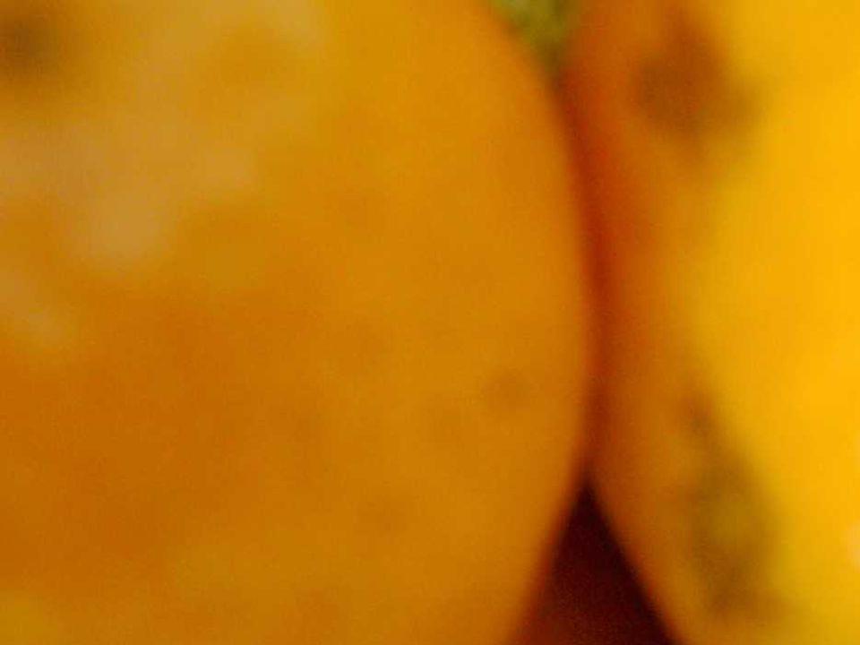 LARANJAS laranjas são sempre coloridas de laranja, cinza ou verde os laranjas são sorrateiros dissimulados rateiros ratazanas solertes as laranjas principalmente aquelas com umbigos sabem cumprir seu cordão umbilical sabem escorrer pela manhã e fazer uma garganta aprazível as laranjas diferentemente dos laranjas se apresentam se oferecem resplandecem e sólidas ou liquefeitas honram sua citricidade os laranjas desonram