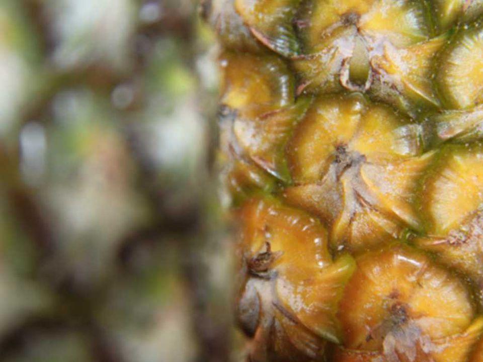MAÇÃS E BANANAS II aliás banana serve para designar figuras sólitas e insólitas mas de que bananas estamos falando.