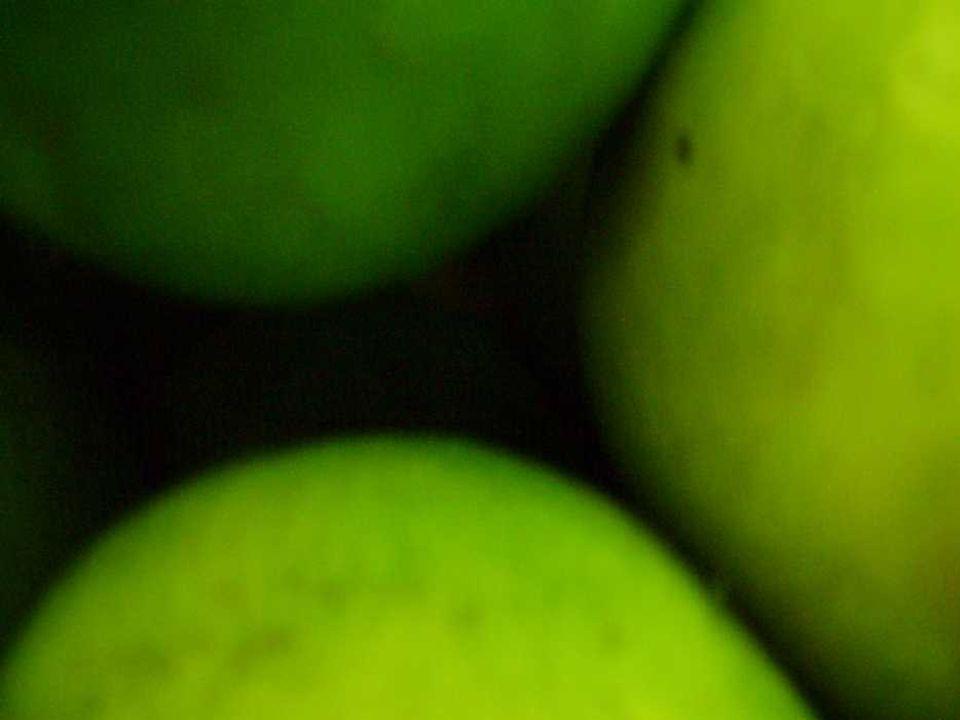 TRILOGIA ALÉM PALADAR FERNANDO RIOS anatomia leguminosa frutas e frutos do bem e do mal eu e os legumes (I) eu e os legumes (II)