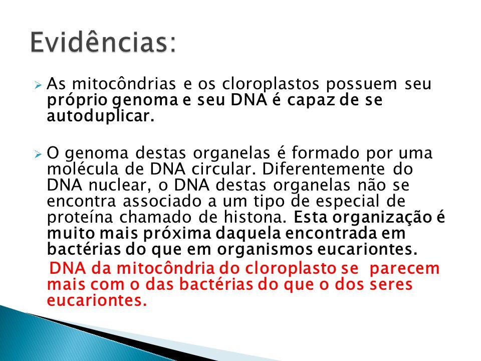  As mitocôndrias e os cloroplastos possuem seu próprio genoma e seu DNA é capaz de se autoduplicar.  O genoma destas organelas é formado por uma mol