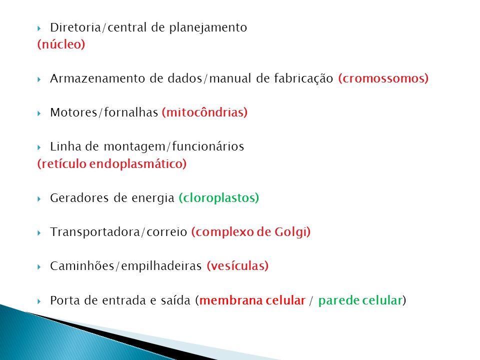  Diretoria/central de planejamento (núcleo)  Armazenamento de dados/manual de fabricação (cromossomos)  Motores/fornalhas (mitocôndrias)  Linha de