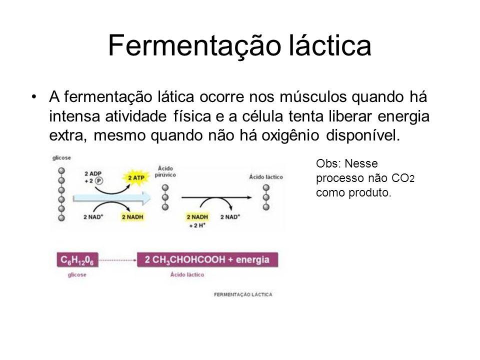 Fermentação láctica A fermentação lática ocorre nos músculos quando há intensa atividade física e a célula tenta liberar energia extra, mesmo quando não há oxigênio disponível.