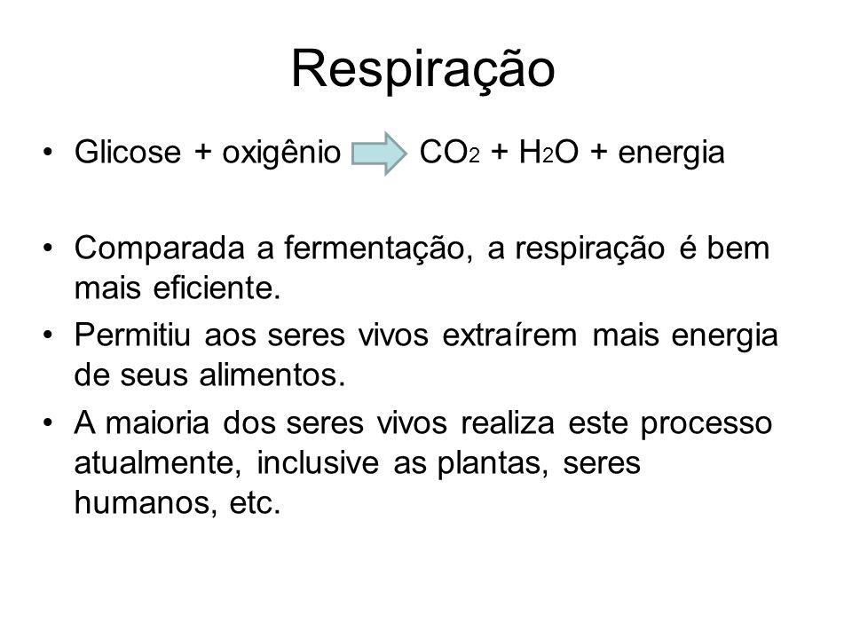 Respiração Glicose + oxigênio CO 2 + H 2 O + energia Comparada a fermentação, a respiração é bem mais eficiente.