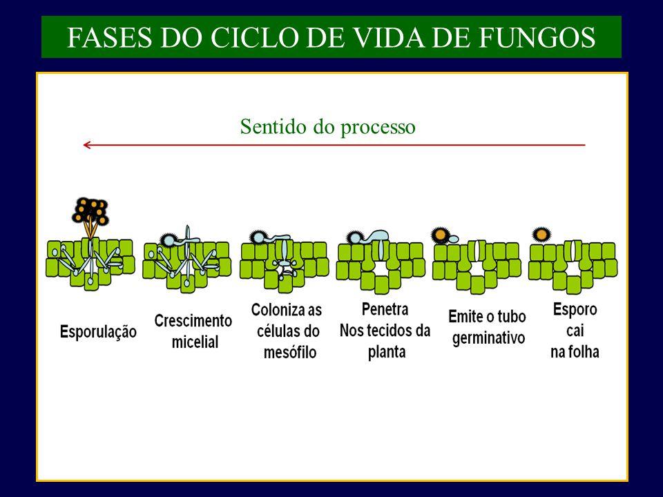 FASES DO CICLO DE VIDA DE FUNGOS Sentido do processo