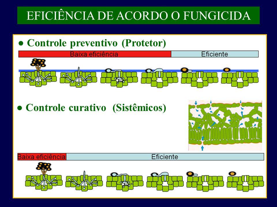 EFICIÊNCIA DE ACORDO O FUNGICIDA ● Controle preventivo (Protetor) ● Controle curativo (Sistêmicos)