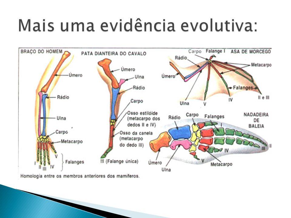  Apesar de ensinar a ementa do ENEM, que considera a evolução como fato dado.