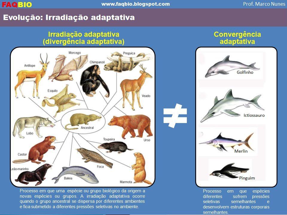  Irradiação Adaptativa Processo que é conseqüência de isolamento geográfico de vários grupos a partir de uma população inicial, levando à diversifica