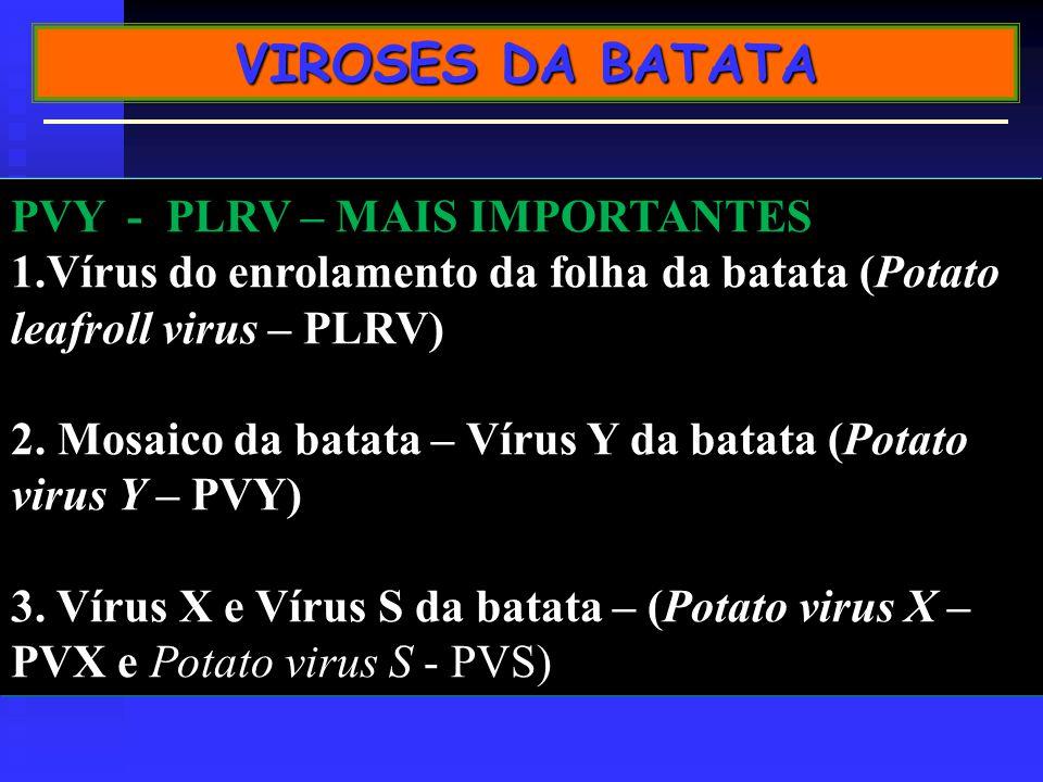 PVY - PLRV – MAIS IMPORTANTES 1.Vírus do enrolamento da folha da batata (Potato leafroll virus – PLRV) 2.
