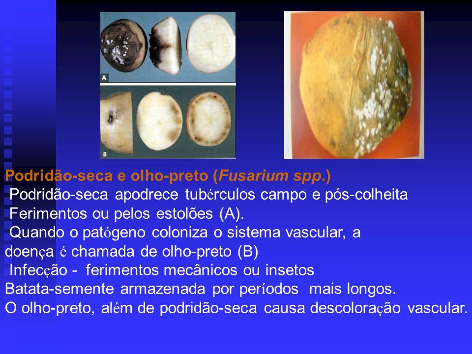 Podridão-seca e olho-preto (Fusarium spp.) Podridão-seca apodrece tub é rculos campo e pós-colheita Ferimentos ou pelos estolões (A).