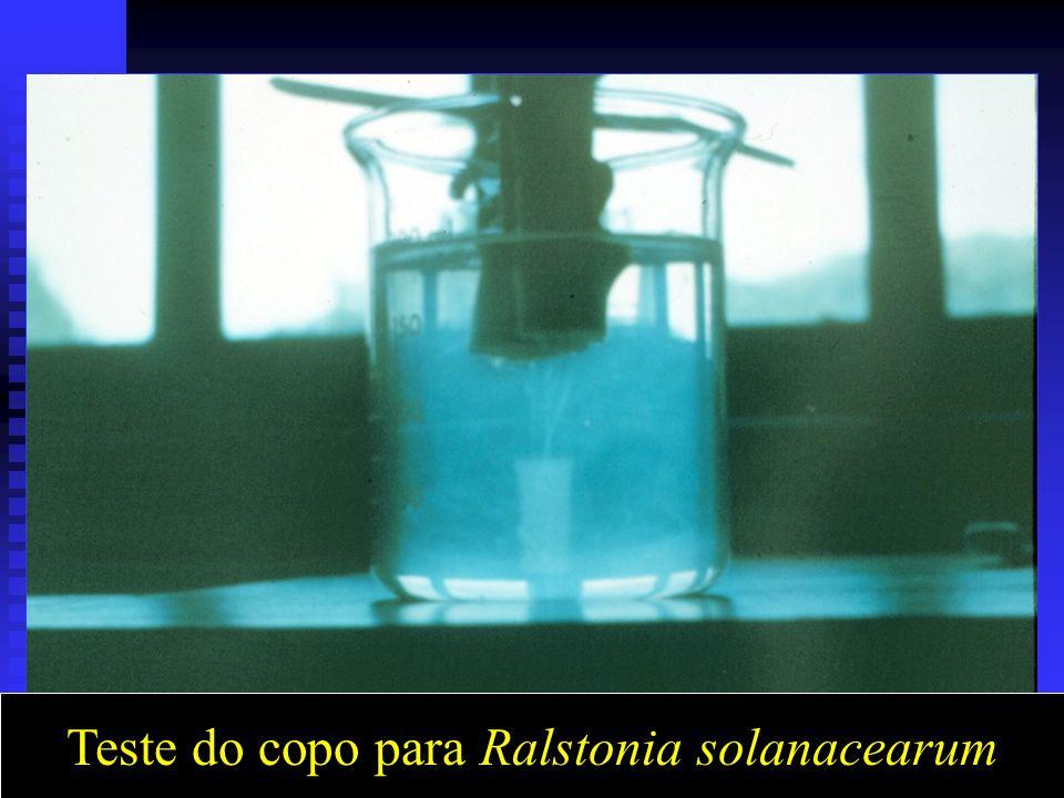 Teste do copo para Ralstonia solanacearum
