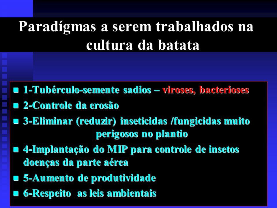 Paradígmas a serem trabalhados na cultura da batata 1-Tubérculo-semente sadios – viroses, bacterioses 1-Tubérculo-semente sadios – viroses, bacterioses 2-Controle da erosão 2-Controle da erosão 3-Eliminar (reduzir) inseticidas /fungicidas muito perigosos no plantio 3-Eliminar (reduzir) inseticidas /fungicidas muito perigosos no plantio 4-Implantação do MIP para controle de insetos doenças da parte aérea 4-Implantação do MIP para controle de insetos doenças da parte aérea 5-Aumento de produtividade 5-Aumento de produtividade 6-Respeito as leis ambientais 6-Respeito as leis ambientais