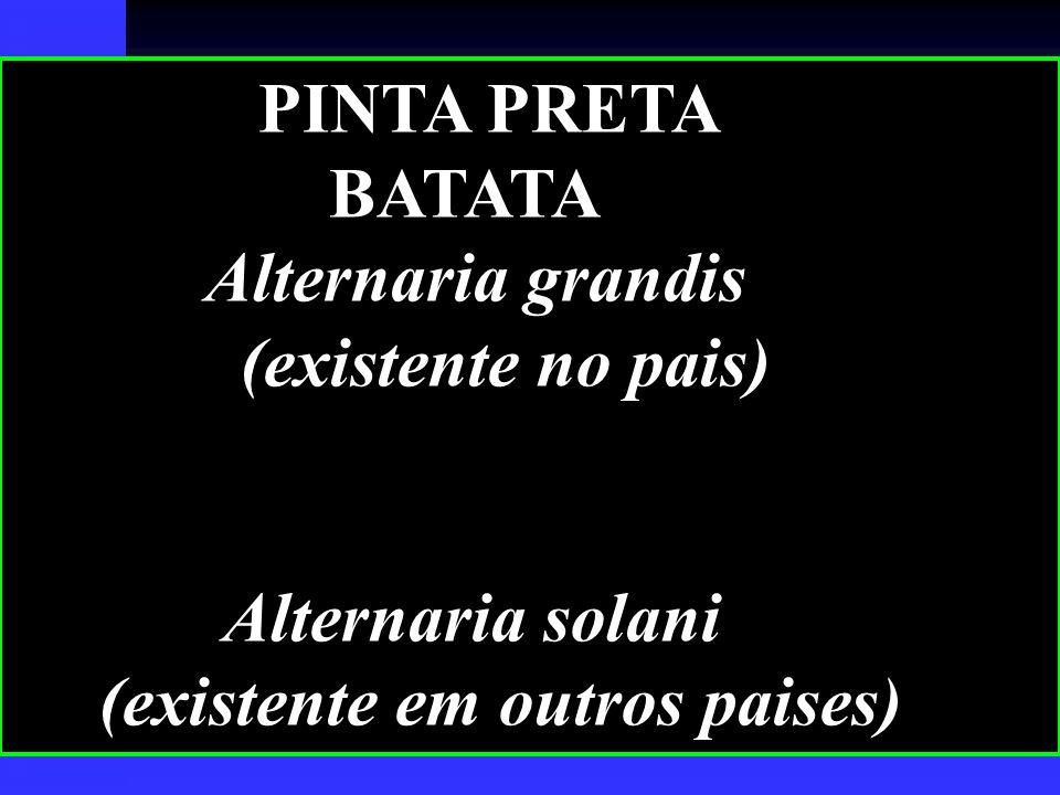 PINTA PRETA BATATA Alternaria grandis (existente no pais) Alternaria solani (existente em outros paises)