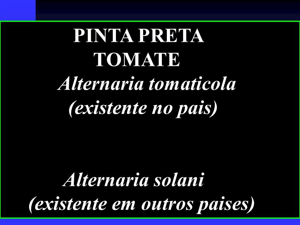 PINTA PRETA TOMATE Alternaria tomaticola (existente no pais) Alternaria solani (existente em outros paises)