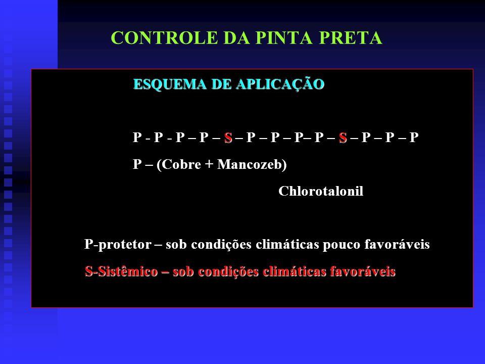 CONTROLE DA PINTA PRETA ESQUEMA DE APLICAÇÃO P - P - P – P – S – P – P – P– P – S – P – P – P P – (Cobre + Mancozeb) Chlorotalonil P-protetor – sob condições climáticas pouco favoráveis S-Sistêmico – sob condições climáticas favoráveis