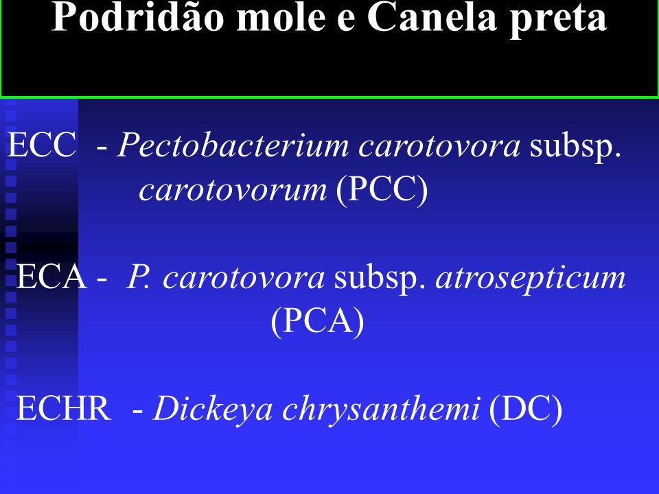 ECC - Pectobacterium carotovora subsp.carotovorum (PCC) ECA - P.