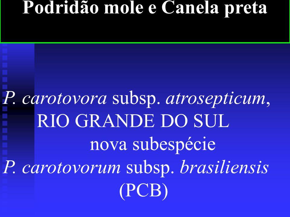 P.carotovora subsp. atrosepticum, RIO GRANDE DO SUL nova subespécie P.
