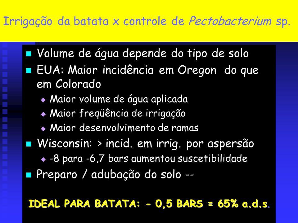 Irrigação da batata x controle de Pectobacterium sp.