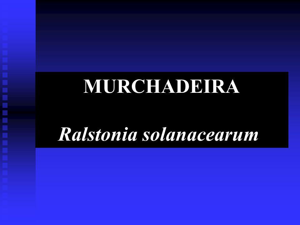 MURCHADEIRA Ralstonia solanacearum