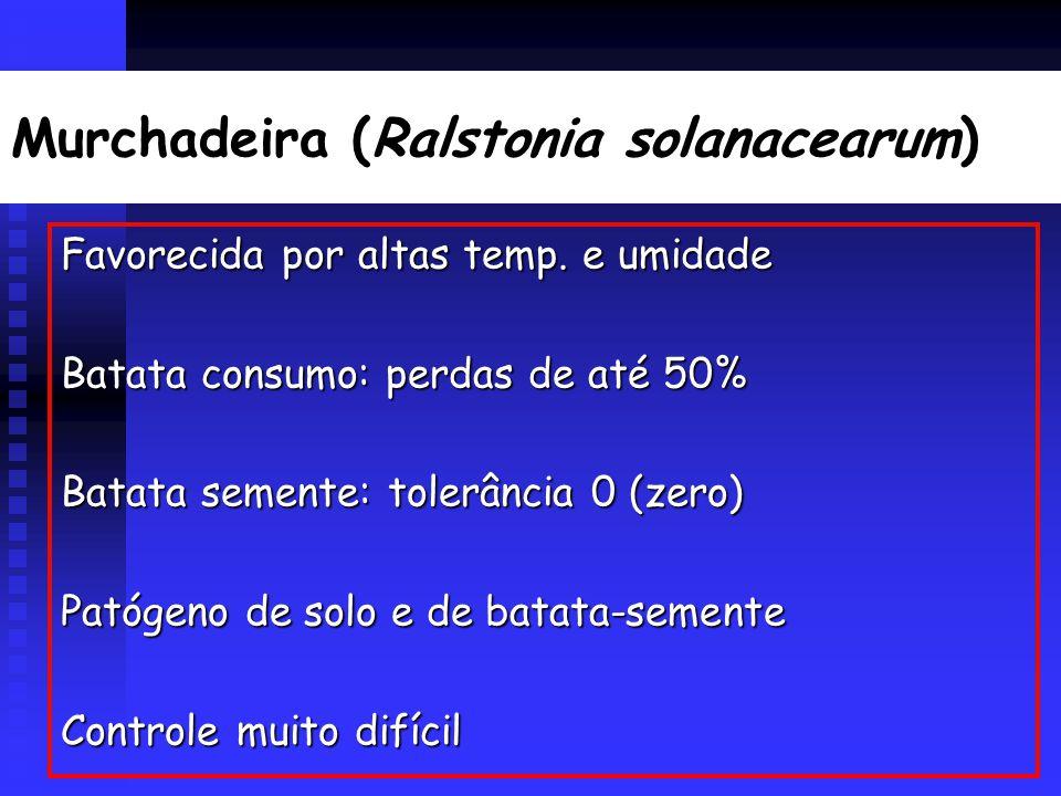 Murchadeira (Ralstonia solanacearum) Favorecida por altas temp.
