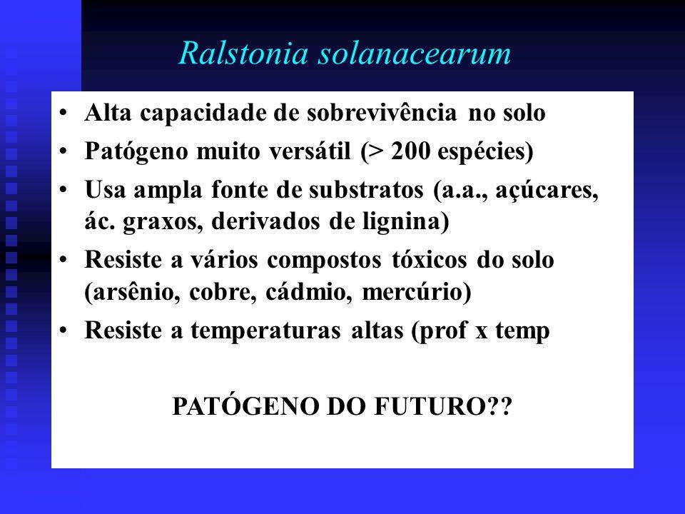Ralstonia solanacearum Alta capacidade de sobrevivência no solo Patógeno muito versátil (> 200 espécies) Usa ampla fonte de substratos (a.a., açúcares, ác.
