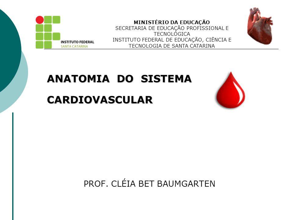  Artéria Pulmonar - leva sangue venoso aos pulmões.