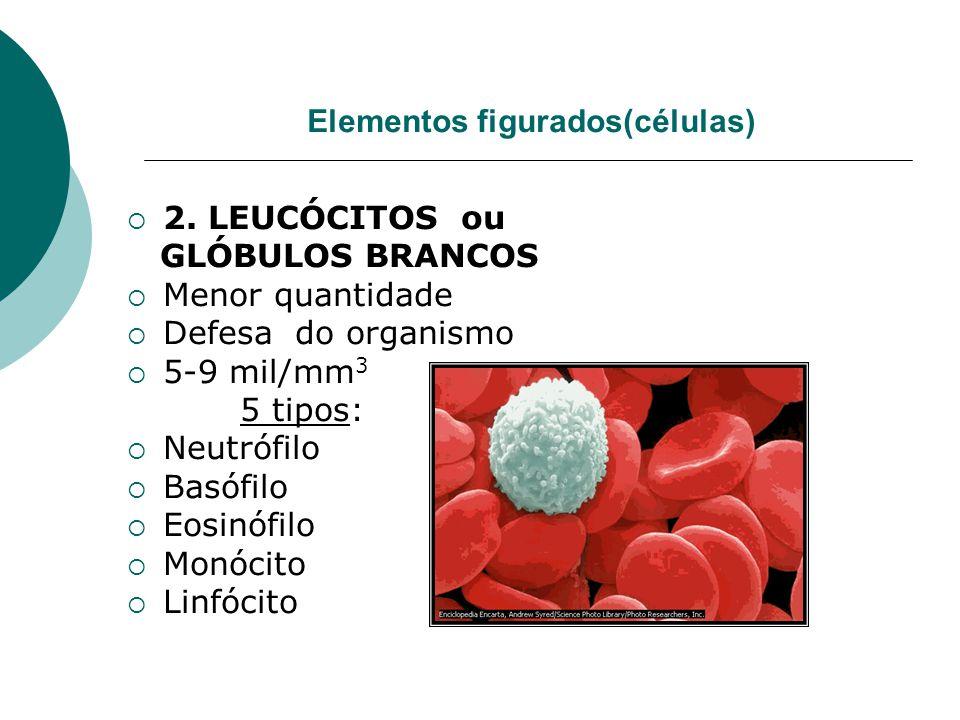 Elementos figurados(células)  2. LEUCÓCITOS ou GLÓBULOS BRANCOS  Menor quantidade  Defesa do organismo  5-9 mil/mm 3 5 tipos:  Neutrófilo  Basóf