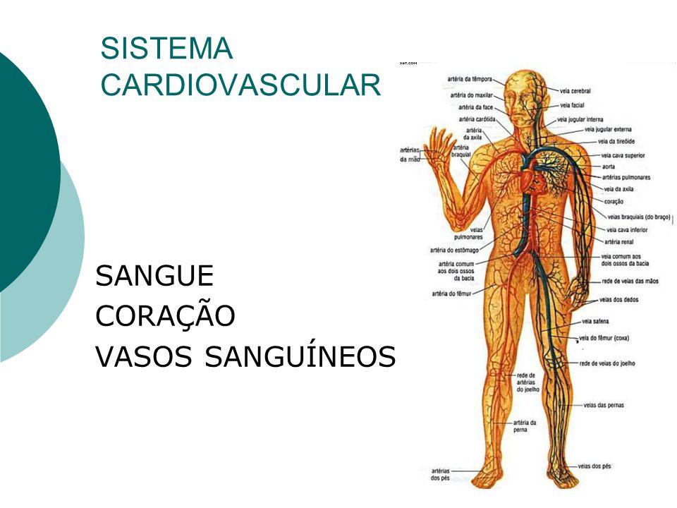 O tronco de todas as artérias é a Artéria Aorta.
