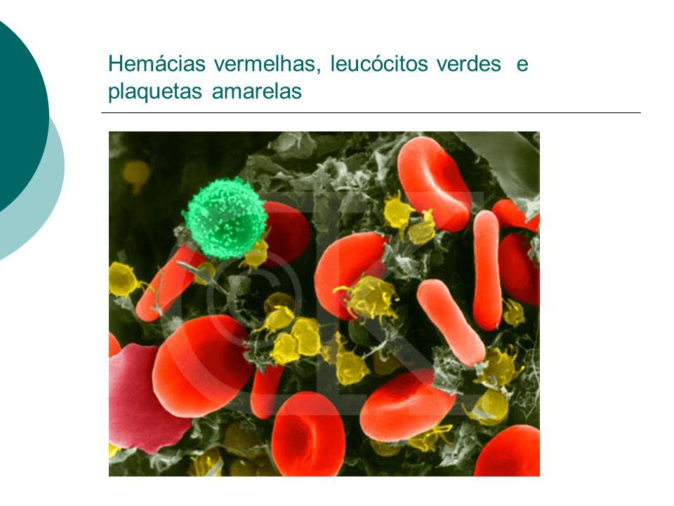 Hemácias vermelhas, leucócitos verdes e plaquetas amarelas