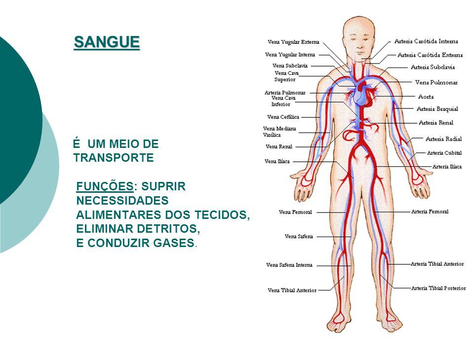 Os vasos que saem do coração são as artérias (A), de paredes grossas e elásticas, que levam o sangue a todo o corpo.