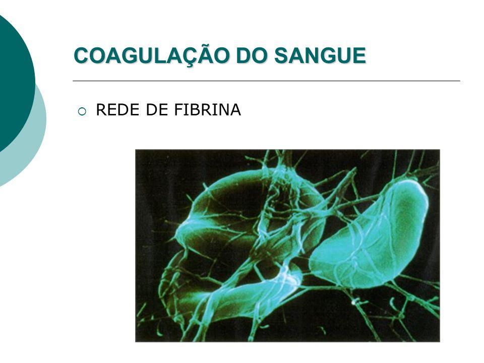 COAGULAÇÃO DO SANGUE  REDE DE FIBRINA