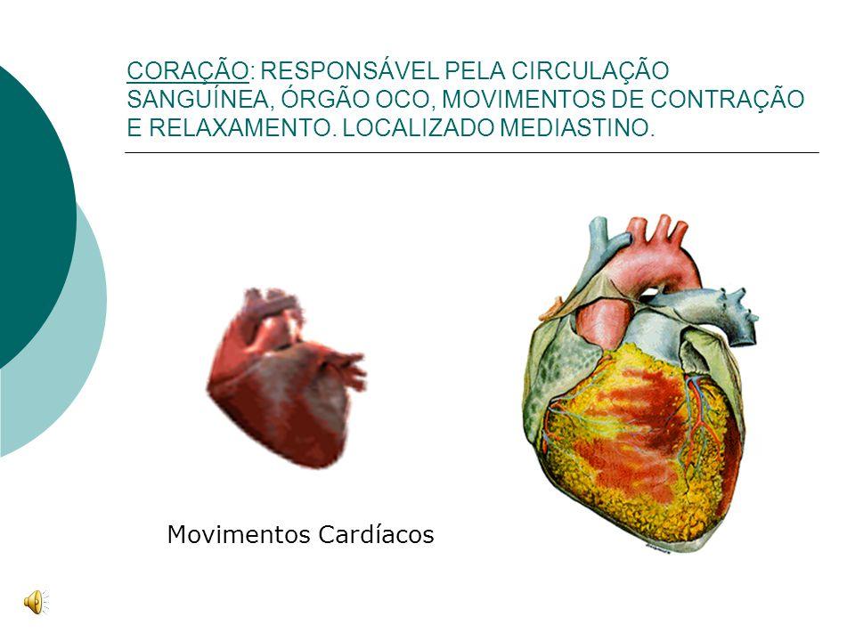 CORAÇÃO: RESPONSÁVEL PELA CIRCULAÇÃO SANGUÍNEA, ÓRGÃO OCO, MOVIMENTOS DE CONTRAÇÃO E RELAXAMENTO. LOCALIZADO MEDIASTINO. Movimentos Cardíacos