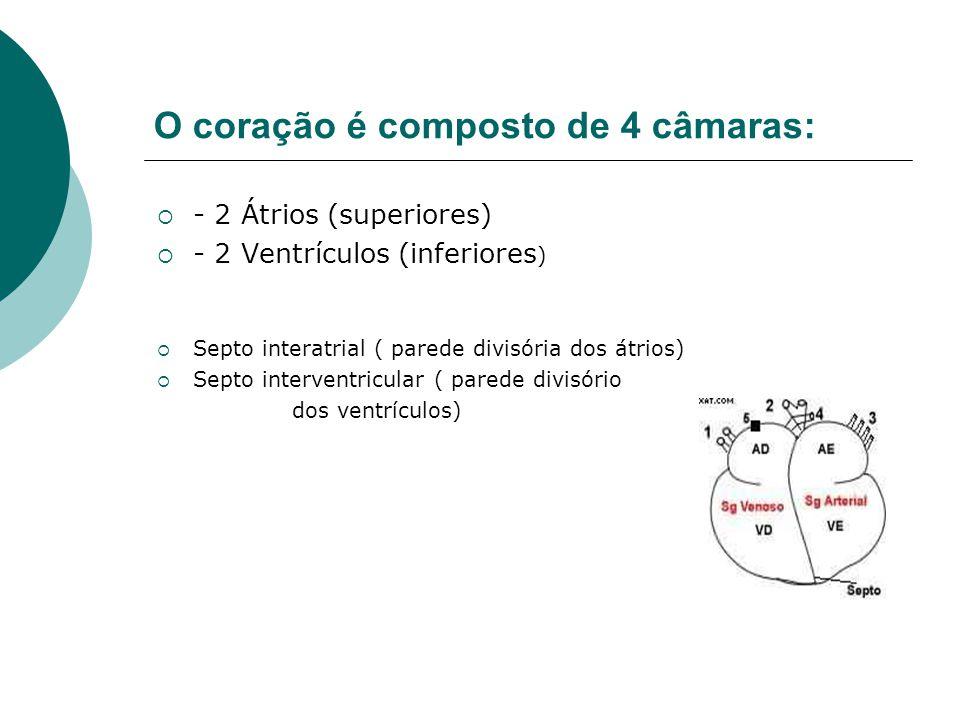 O coração é composto de 4 câmaras:  - 2 Átrios (superiores)  - 2 Ventrículos (inferiores )  Septo interatrial ( parede divisória dos átrios)  Sept