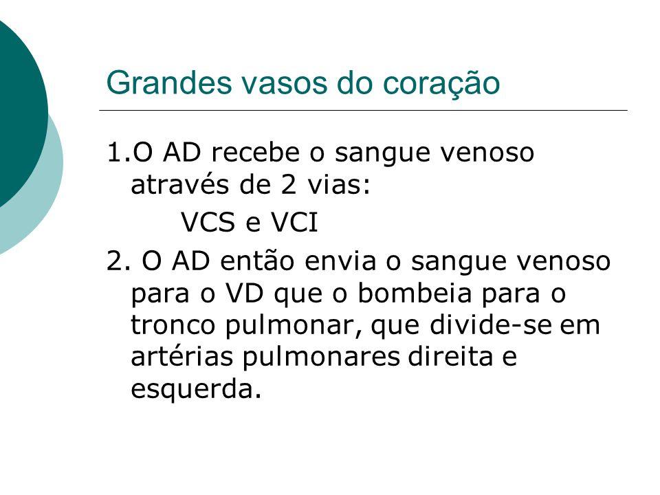 Grandes vasos do coração 1.O AD recebe o sangue venoso através de 2 vias: VCS e VCI 2. O AD então envia o sangue venoso para o VD que o bombeia para o