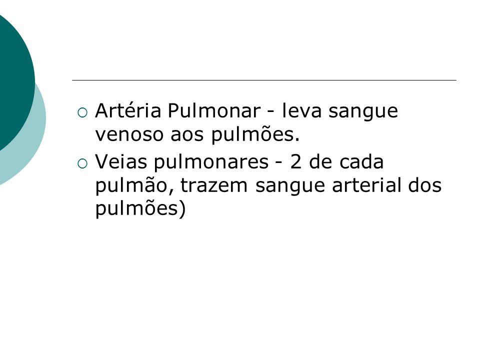  Artéria Pulmonar - leva sangue venoso aos pulmões.  Veias pulmonares - 2 de cada pulmão, trazem sangue arterial dos pulmões)