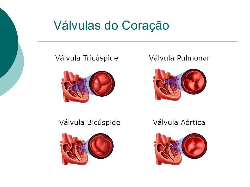 Válvula TricúspideVálvula Pulmonar Válvula BicúspideVálvula Aórtica
