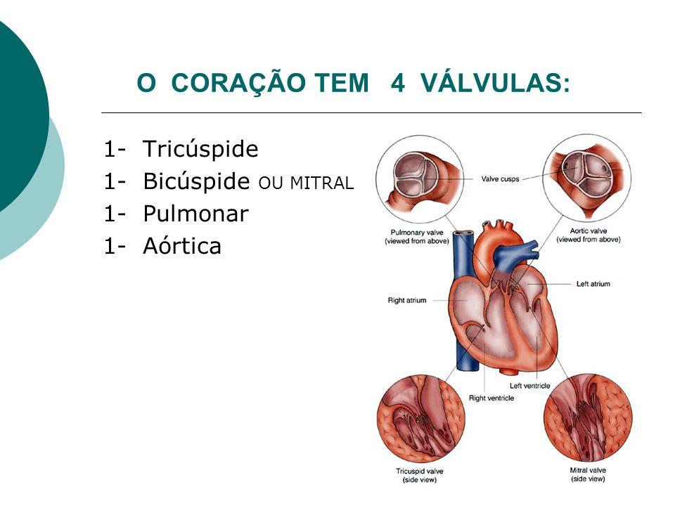 O CORAÇÃO TEM 4 VÁLVULAS: 1- Tricúspide 1- Bicúspide OU MITRAL 1- Pulmonar 1- Aórtica