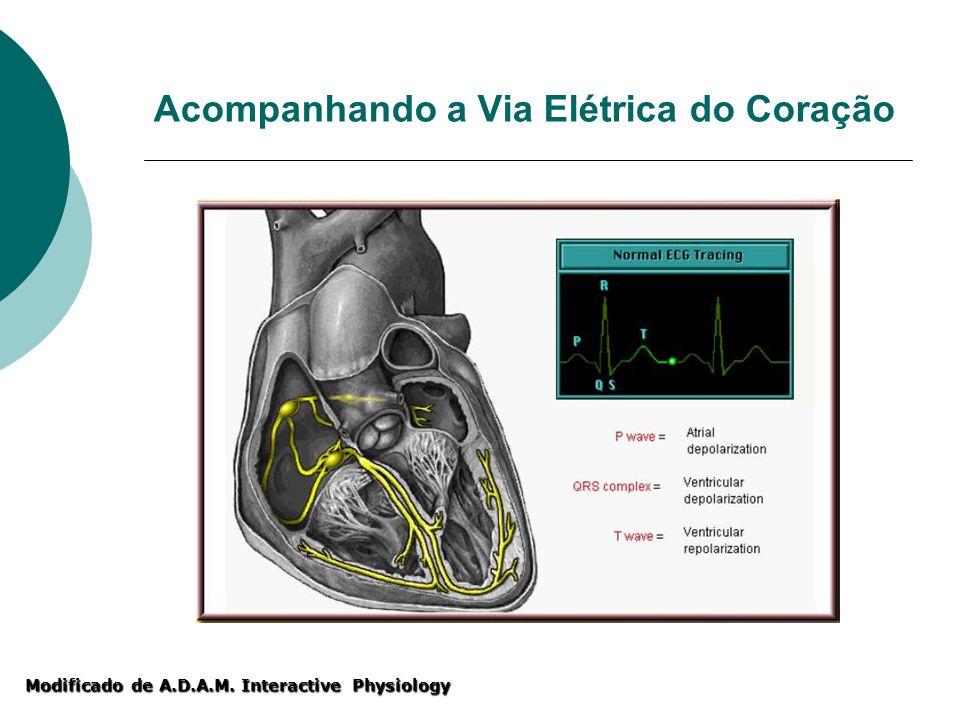 Modificado de A.D.A.M. Interactive Physiology Acompanhando a Via Elétrica do Coração