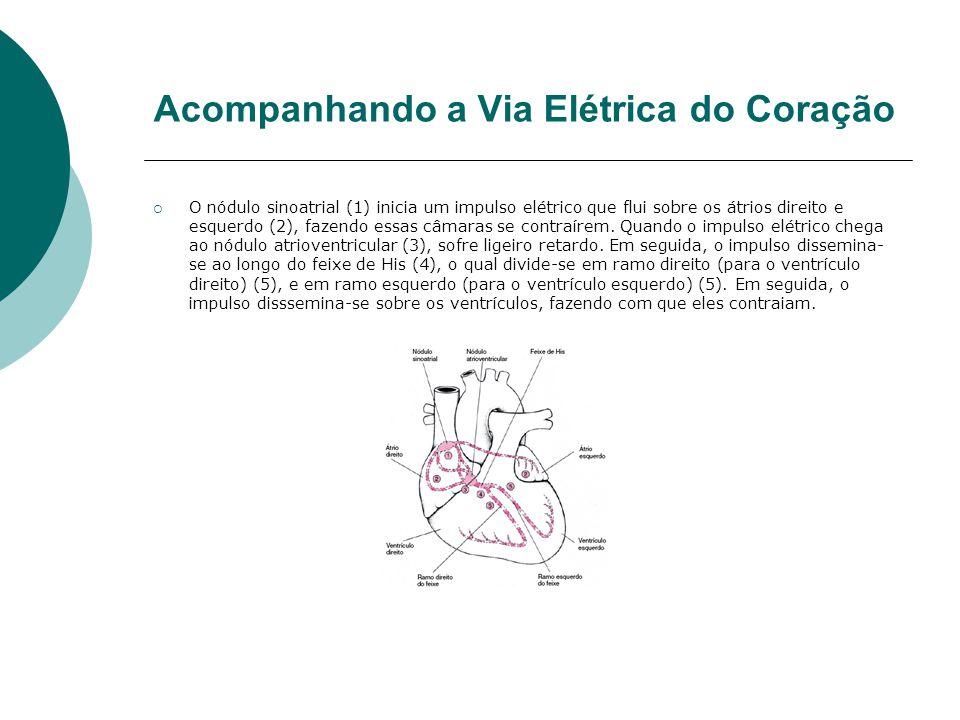 Acompanhando a Via Elétrica do Coração  O nódulo sinoatrial (1) inicia um impulso elétrico que flui sobre os átrios direito e esquerdo (2), fazendo e