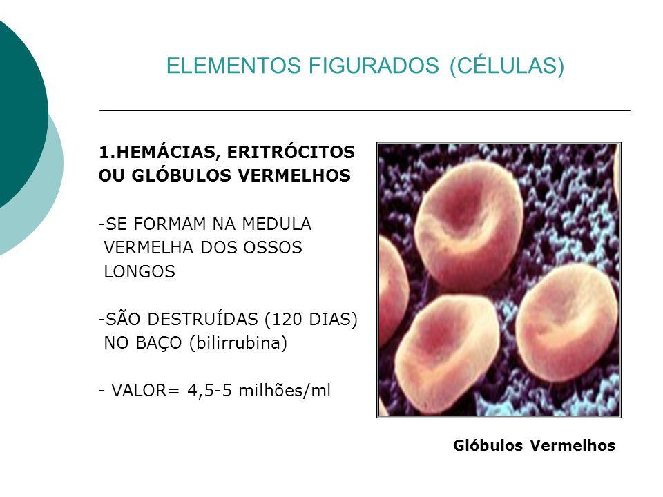 ELEMENTOS FIGURADOS (CÉLULAS) 1.HEMÁCIAS, ERITRÓCITOS OU GLÓBULOS VERMELHOS -SE FORMAM NA MEDULA VERMELHA DOS OSSOS LONGOS -SÃO DESTRUÍDAS (120 DIAS)