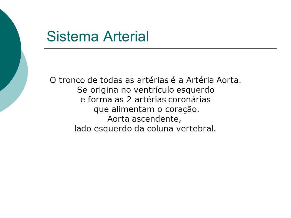 O tronco de todas as artérias é a Artéria Aorta. Se origina no ventrículo esquerdo e forma as 2 artérias coronárias que alimentam o coração. Aorta asc