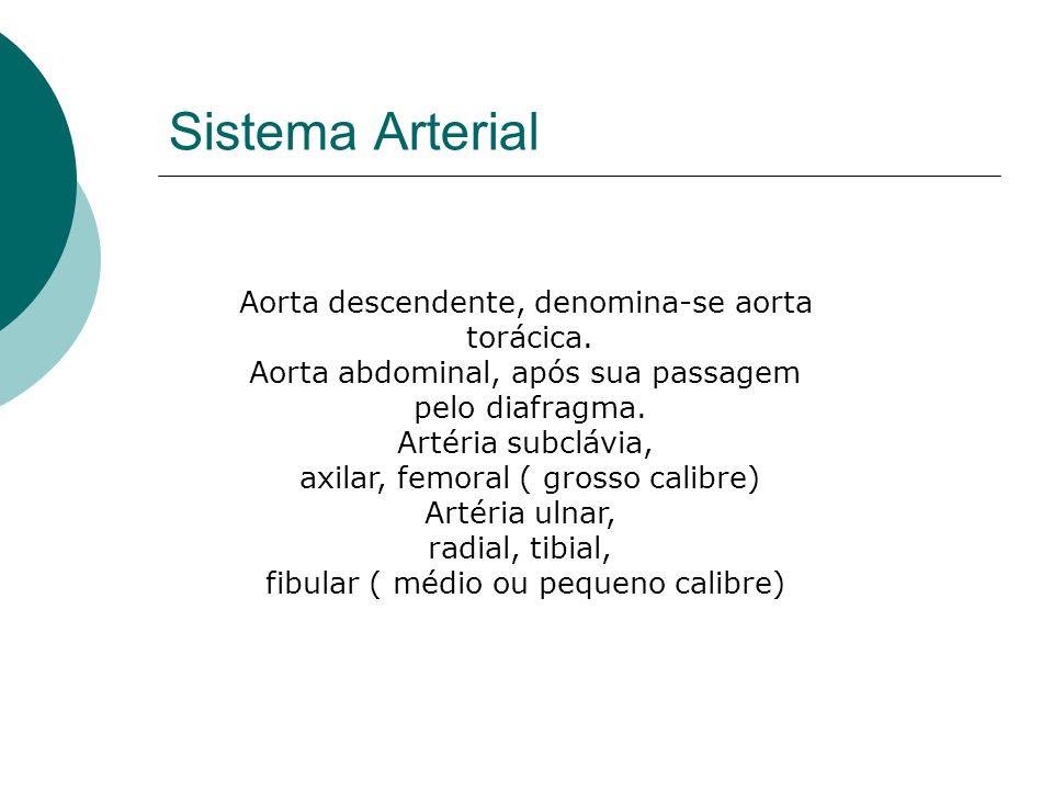 Aorta descendente, denomina-se aorta torácica. Aorta abdominal, após sua passagem pelo diafragma. Artéria subclávia, axilar, femoral ( grosso calibre)