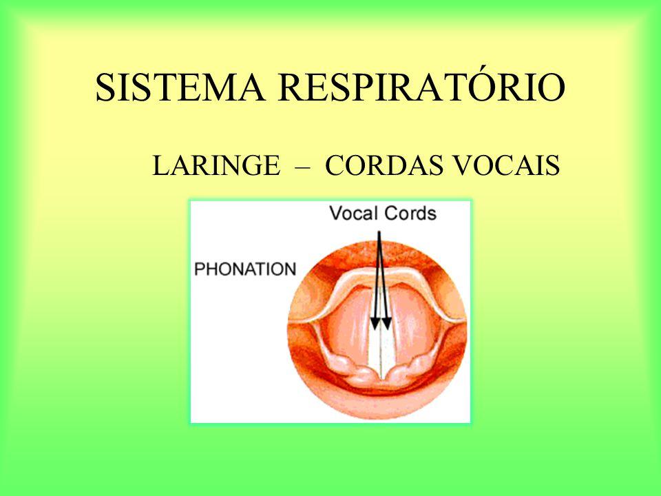 SISTEMA RESPIRATÓRIO LARINGE – CORDAS VOCAIS