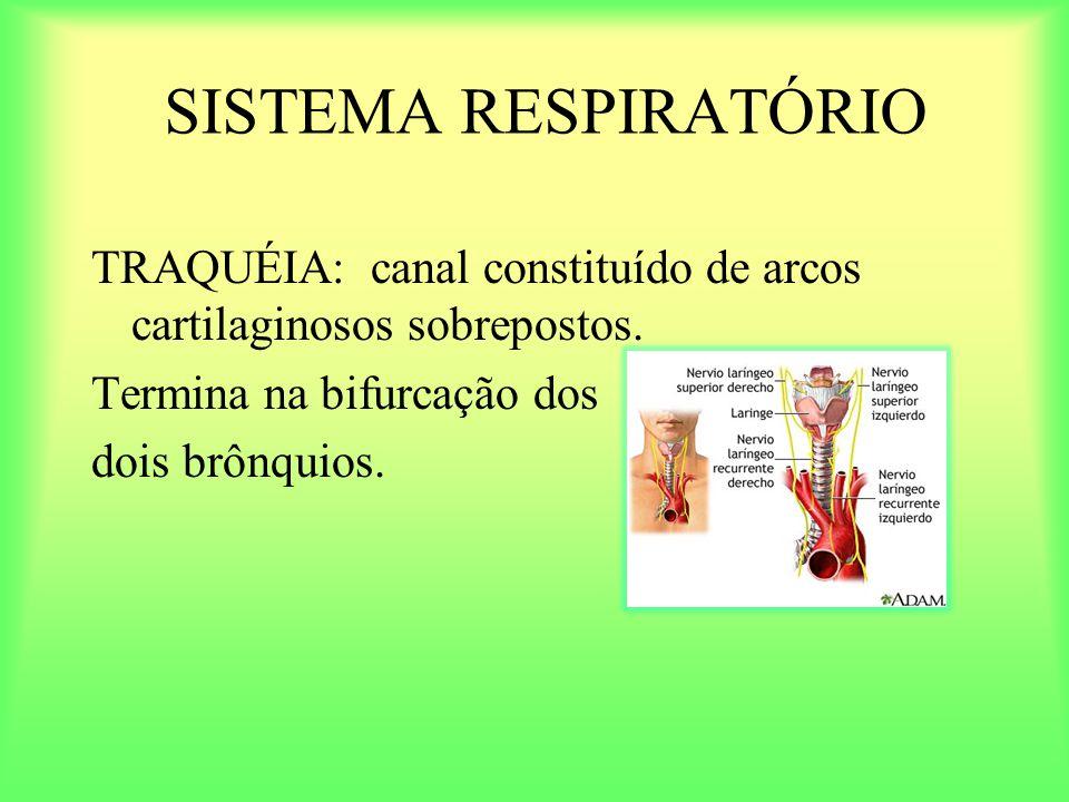 TRAQUÉIA: canal constituído de arcos cartilaginosos sobrepostos. Termina na bifurcação dos dois brônquios.