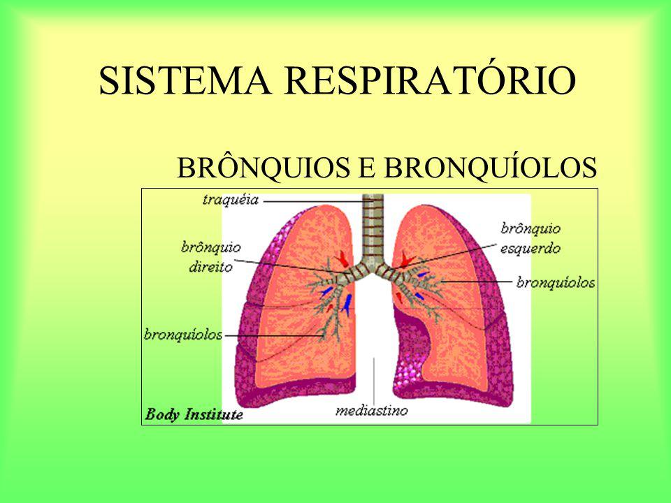 SISTEMA RESPIRATÓRIO BRÔNQUIOS E BRONQUÍOLOS