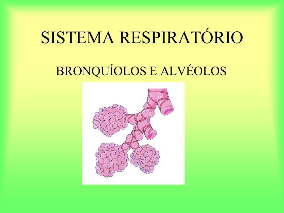 SISTEMA RESPIRATÓRIO BRONQUÍOLOS E ALVÉOLOS