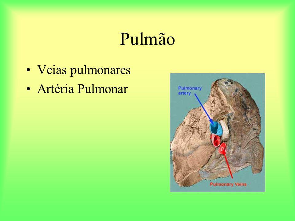 Pulmão Veias pulmonares Artéria Pulmonar