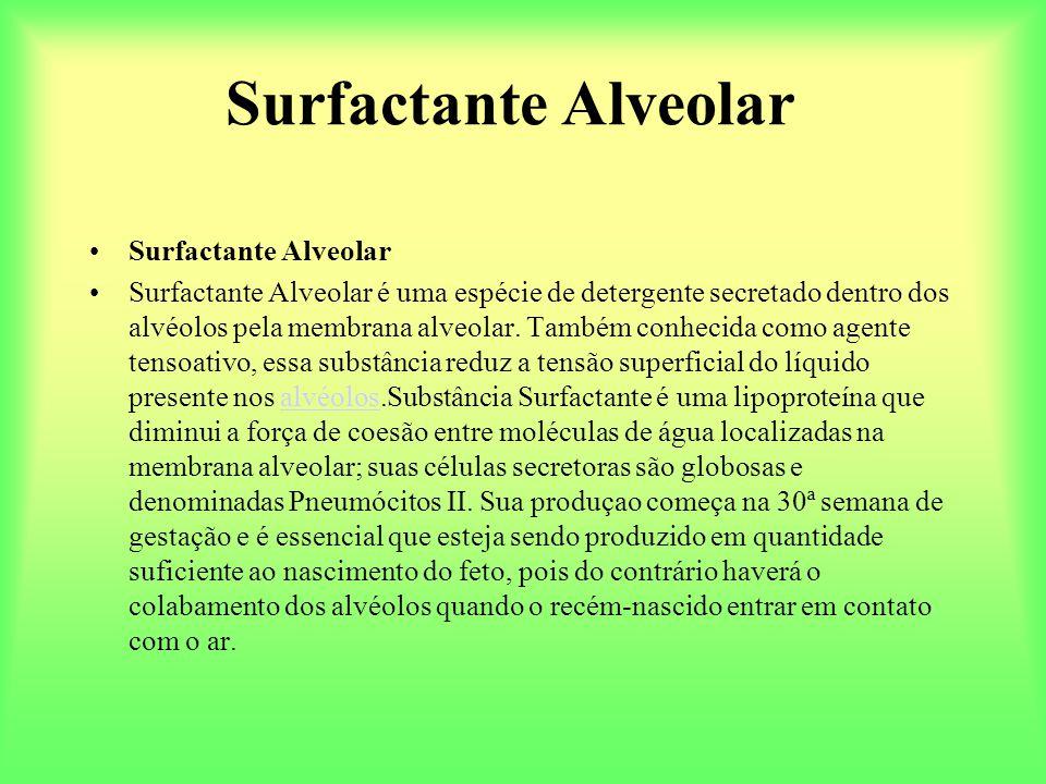 Surfactante Alveolar Surfactante Alveolar é uma espécie de detergente secretado dentro dos alvéolos pela membrana alveolar. Também conhecida como agen