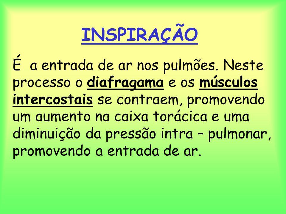 INSPIRAÇÃO É a entrada de ar nos pulmões. Neste processo o diafragama e os músculos intercostais se contraem, promovendo um aumento na caixa torácica